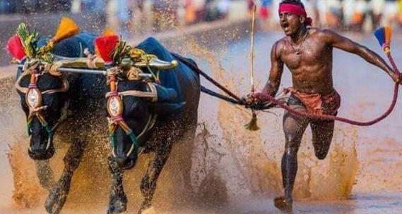 kambala runner