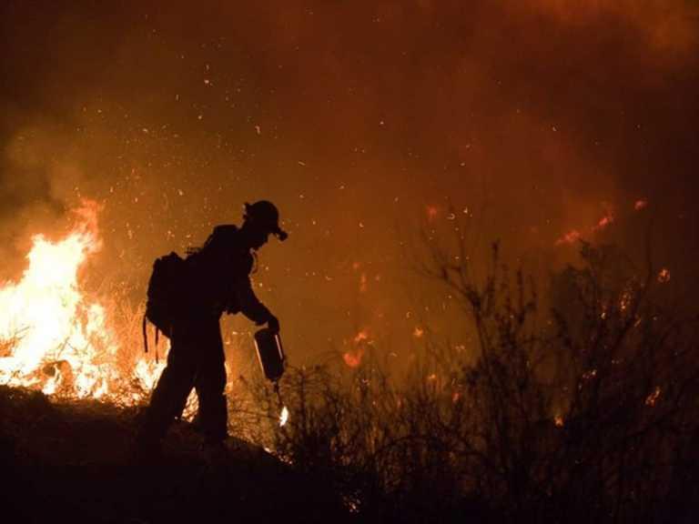 3 billion animals killed, displaced in Aus wildfires